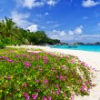 Idyllic beach of Similan islands — Lizenzfreies Foto