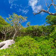 Jungle scenery of Similan islands — Stock Photo