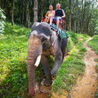 Elephant trekking in Khao Sok National Park — Stock Photo #16328653