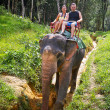 Stock Photo: Elephant trekking in Khao Sok National Park