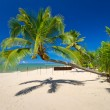 Beautiful tropical beach with coconut palm tree — Stock Photo