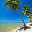 Beautiful tropical beach with coconut palm tree — Stock Photo #16329045