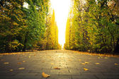Autumnal alley in the park of Gdansk — Stock Photo