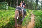 Elephant trekking in Khao Sok National Park — Stock Photo
