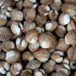 Stock Photo: Scallops on local market
