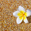 Stock Photo: Tropical flower