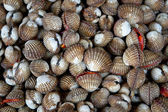 Scallops on the local market — Stock Photo