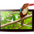 Stockfoto: TV with 3D bird on display
