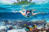 Snorkeling in the tropical water — 图库照片