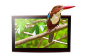 TV with 3D bird on display — Stock Photo