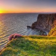 Cliffs of Moher at sunset in Co. Clare — Stock Photo #18736877