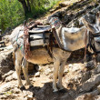 Donkey transportation in the mountains — Stock Photo