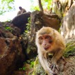 Macaque monkey in widelife — Stock Photo #19363671