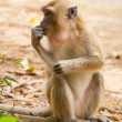 Stock Photo: Macaque monkey in widelife