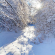 Snowy forest in the winter time — Stock Photo