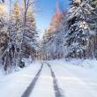 Snowy road in the winter forest — Stock Photo