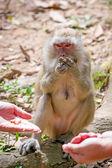 猕猴在禽类中 — 图库照片