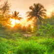 Amazing sunrise in the jungle of Thailand - Stock Photo