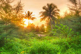 Amazing sunrise in the jungle of Thailand — Stock Photo
