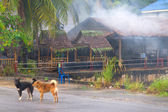 Perros en la calle en tailandia — Foto de Stock