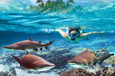 Snorkeling with dangerous bull sharks — Stock Photo