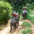Elephant trekking in Khao Sok National Park — Stock Photo
