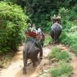 Elephant trekking in Khao Sok National Park — Stock Photo #21906145
