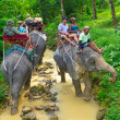 Elephant trekking in Khao Sok National Park — Stock Photo #21906313