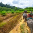 Elephant trekking in Khao Sok National Park — Stock Photo #21906347
