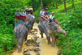 Elephant trekking in Khao Sok National Park — Photo