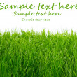 Green fresh grass background — Stock Photo