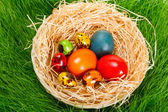 Colorful painted easter eggs in nest — Stock Photo