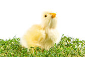 Chick in the garden cress — Stock Photo