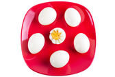 Boiled eggs on red plate — Stock Photo