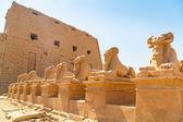 Statues of Ram-headed sphinxes in Karnak temple — Stock Photo