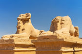 Statues of Ram-headed sphinxes in Karnak temple — Stock Photo