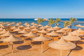 Parasols on the beach of Red Sea — Stock Photo