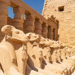 Ancient statues of Ram-headed sphinxes in Karnak temple - Stok fotoraf