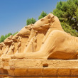 Ancient statues of Ram-headed sphinxes in Karnak temple — Stock Photo