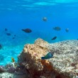 Stock Photo: Coral reef of Red Sea with tropical fishes