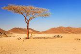 Idyllic desert scenery with single tree — Stock Photo