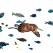 Green turtle and tropical fishes — Stock Photo