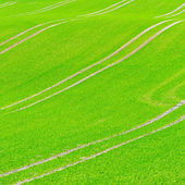 Beautiful green field pattern — Photo