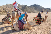 Camel ride on the desert in Egypt — Stock Photo