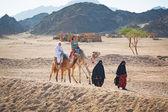 Camel ride on the desert in Egypt — Stock Photo