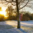 Sunrise over frozen park — Stok fotoğraf