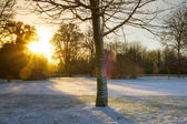 Sunrise over frozen park — Stock Photo