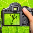 Nature photography — Stock Photo