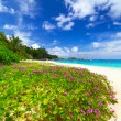 Stock Photo: Paradise beach of Similan islands