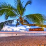 Coconut palm tree at sunset on Koh Kho Khao island — Stock Photo